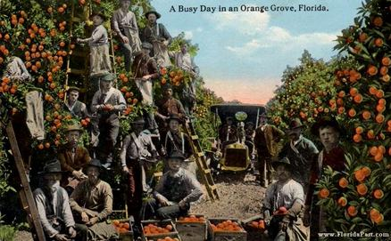 As we can see, there were All Kinds of People Pick'in Citrus Groves of FloridaPast