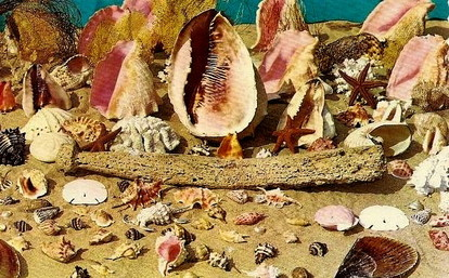 See Sally Save Sea Shells by the Sea Shore