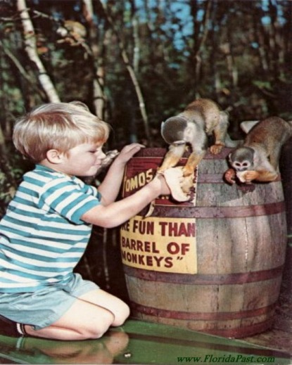 MONKEY ISLAND STILL EXISTS TODAY - KLICK THE BARREL OF MONKEYS & LEARN MORE About this FloridaPast Attraction